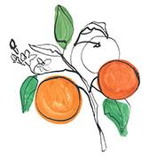 Vitamin C Source Oranges
