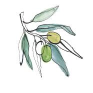 COQ10 Source Olives
